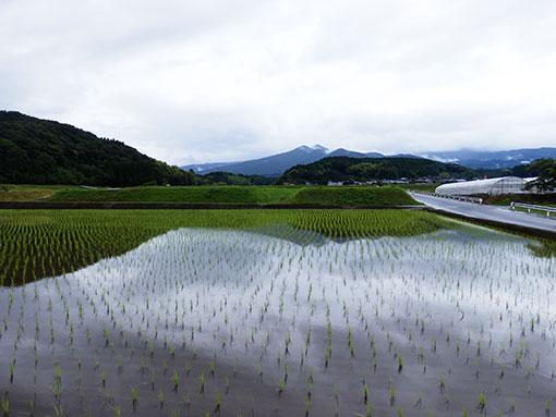 農業法人明るい農村 田植え後2015 水鏡
