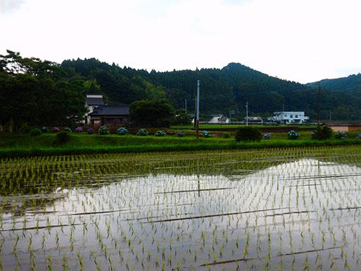 2016田植え