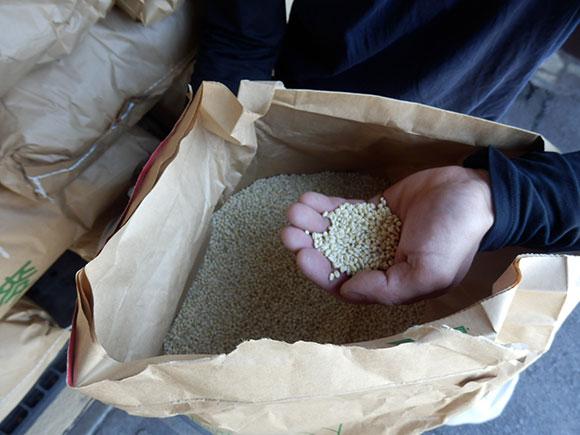 明るい農村 麦