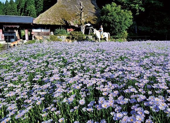 愛馬と守る花畑