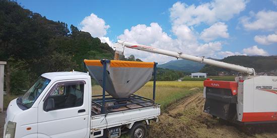 農業法人 明るい農村 稲刈り