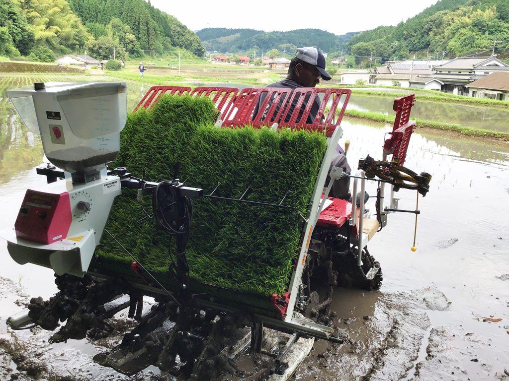 農業法人「明るい農村」でも田植えがスタートしました。 今年は、新しい田植え機を導入しました。 自社米でできた米麹で美味しい焼酎ができますように!
