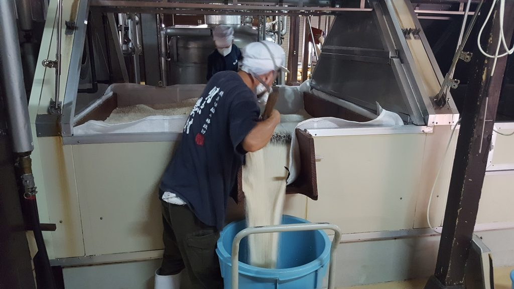 焼酎の米麹造りの様子~出麹