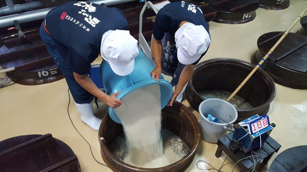 米麹をかめ壺にいれて、1次仕込みをおこないます。